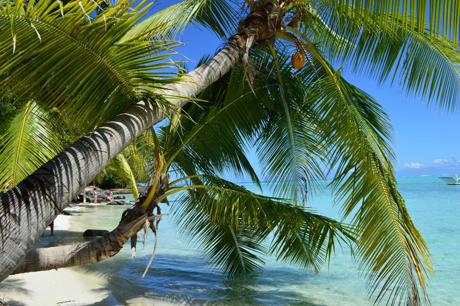 フリー写真 ボラボラ島のビーチとヤシの木