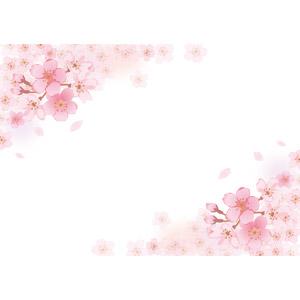 フリーイラスト, ベクター画像, EPS, 背景, フレーム, 対角フレーム, 植物, 花, 桜(サクラ), 花びら, 春