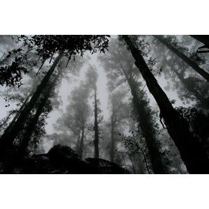 フリー写真, 風景, 自然, 霧(霞), 樹木, モノクロ, 森林