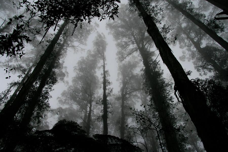 フリー写真 霧に覆われる森の木々の風景