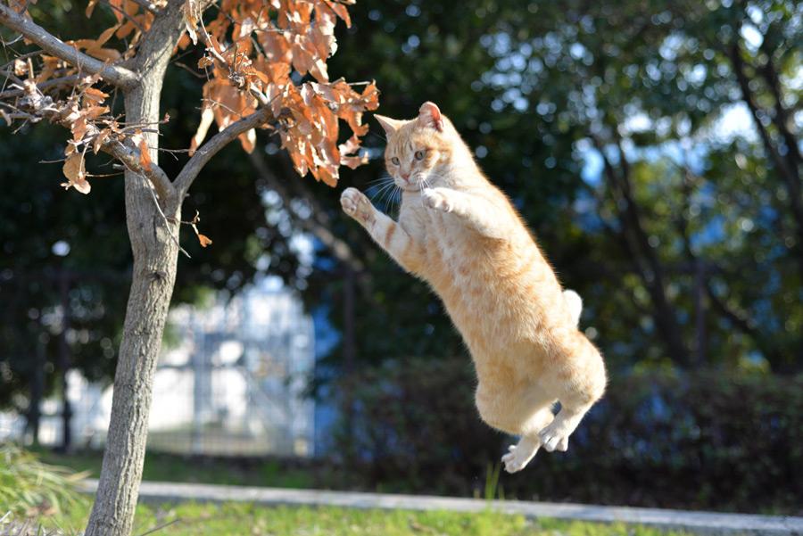 フリー写真 飛び跳ねるチャトラ猫