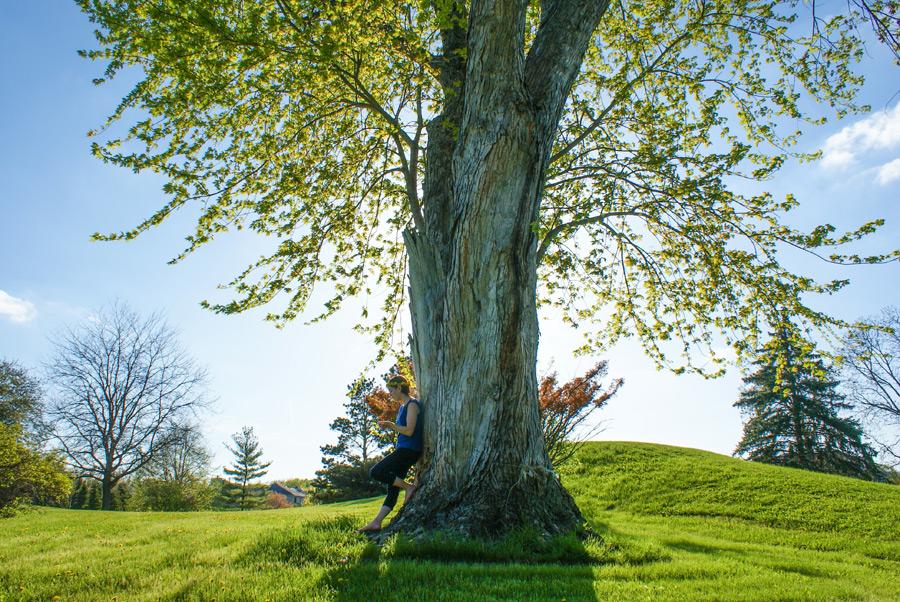 フリー写真 大きな木ともたれかかる女性
