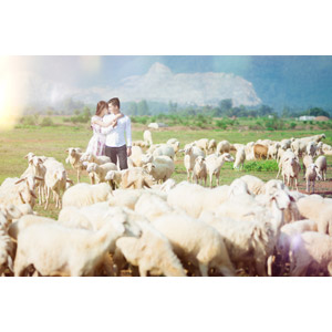 フリー写真, 人物, カップル, 恋人, ベトナム人, 動物, 哺乳類, 羊(ヒツジ), 群れ, 放牧, 向かい合う