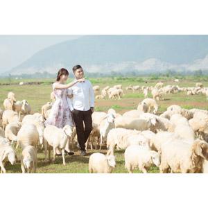 フリー写真, 人物, カップル, 恋人, ベトナム人, 動物, 哺乳類, 羊(ヒツジ), 群れ, 放牧, 指差す