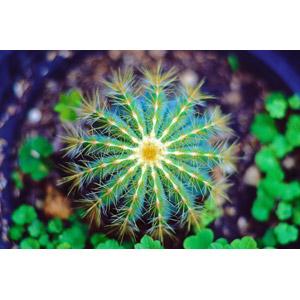 フリー写真, 植物, 多肉植物, サボテン