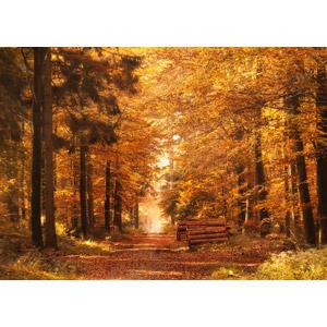 フリー写真, 風景, 森林, 紅葉(黄葉), 秋, 小道
