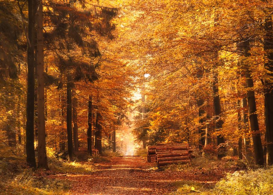 フリー写真 紅葉した森の木々と小道