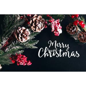 フリー写真, 年中行事, クリスマス, 12月, 冬, メリークリスマス, 松ぼっくり(松笠), セイヨウヒイラギ