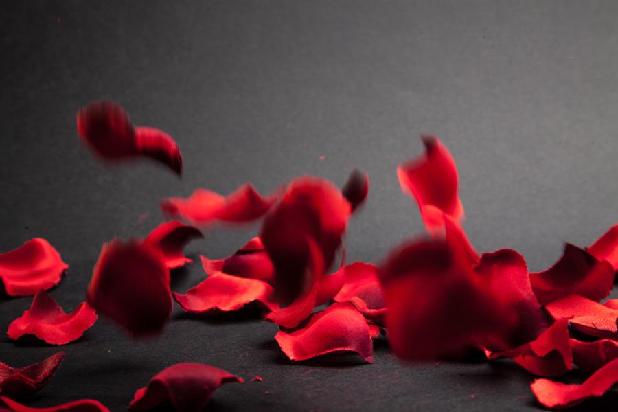 フリー写真 バラの花びら