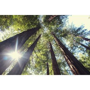 フリー写真, 風景, 自然, 森林, 樹木, 木漏れ日, 太陽光(日光)