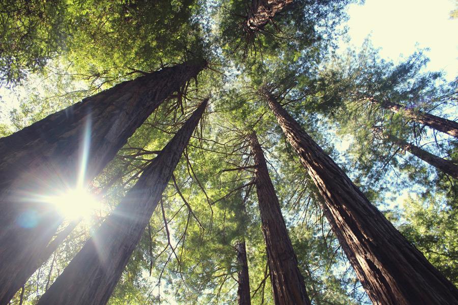 フリー写真 下から見上げる森の木々と木漏れ日