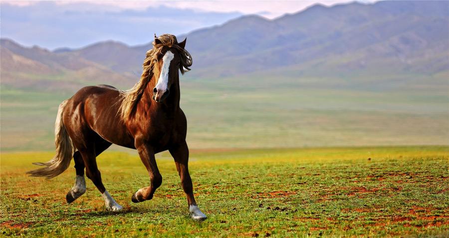 フリー写真 草原を駆ける馬