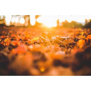 フリー写真, 風景, 自然, 落葉(落ち葉), 秋, 太陽光(日光)
