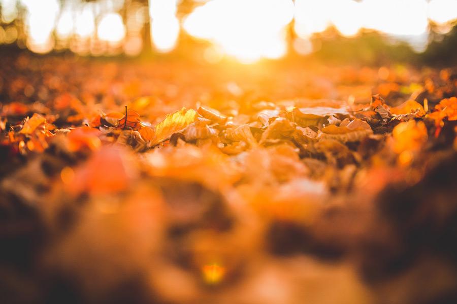 フリー写真 太陽の光と落ち葉の風景