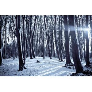 フリー写真, 風景, 自然, 森林, 樹木, 雪, 冬