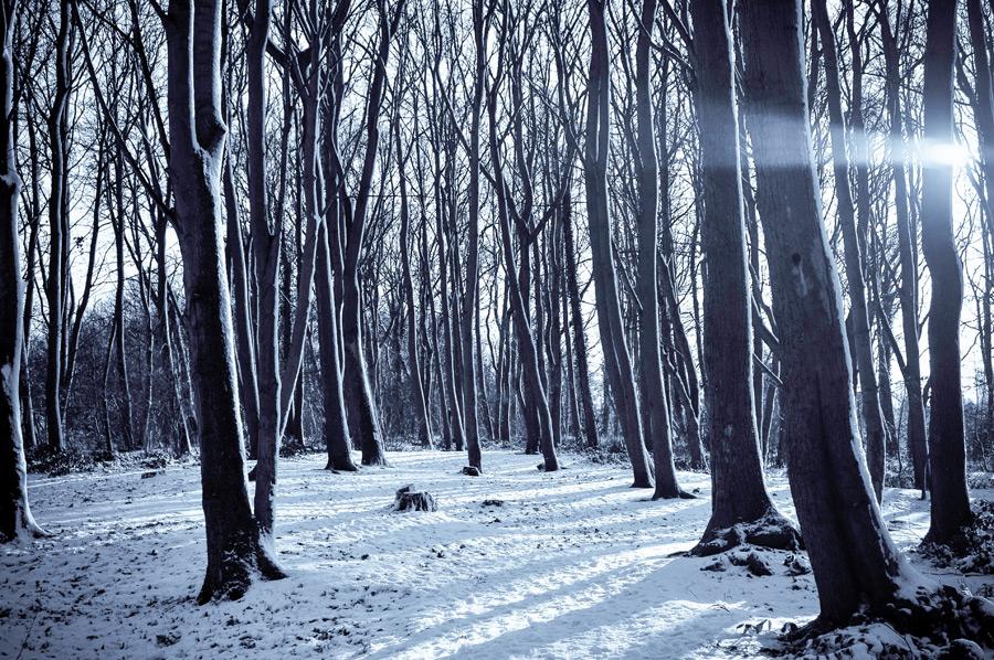 フリー写真 雪と森の木々の風景
