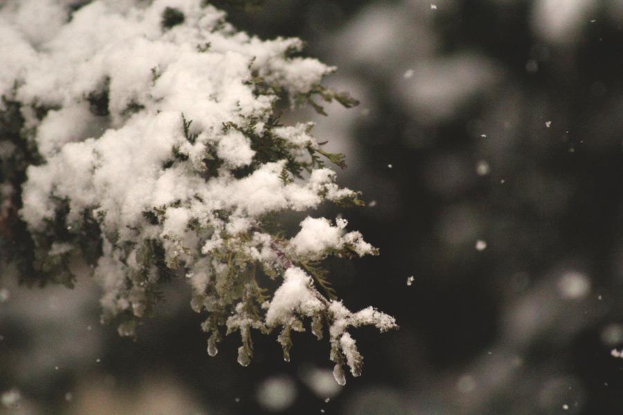 フリー写真 木の枝に積もる雪