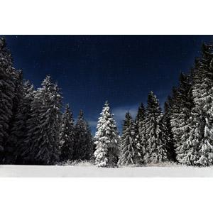 フリー写真, 風景, 自然, 森林, 樹木, 雪, 冬, 夜, 星(スター), 夜空