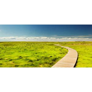 フリー写真, 風景, 遊歩道, 草むら, 沼地, 小道, アメリカの風景, マサチューセッツ州