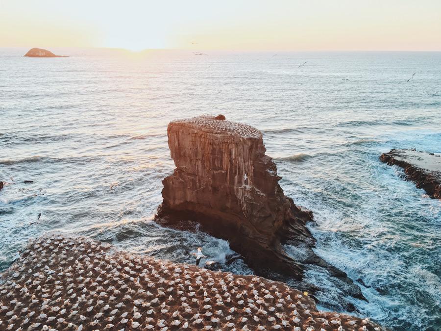 フリー写真 ムリワイ・ビーチのシロカツオドリの群れ