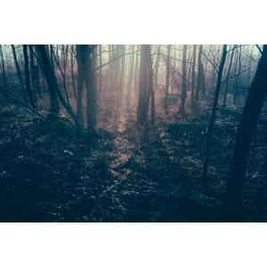 フリー写真, 風景, 自然, 霧(霞), 森林, 樹木