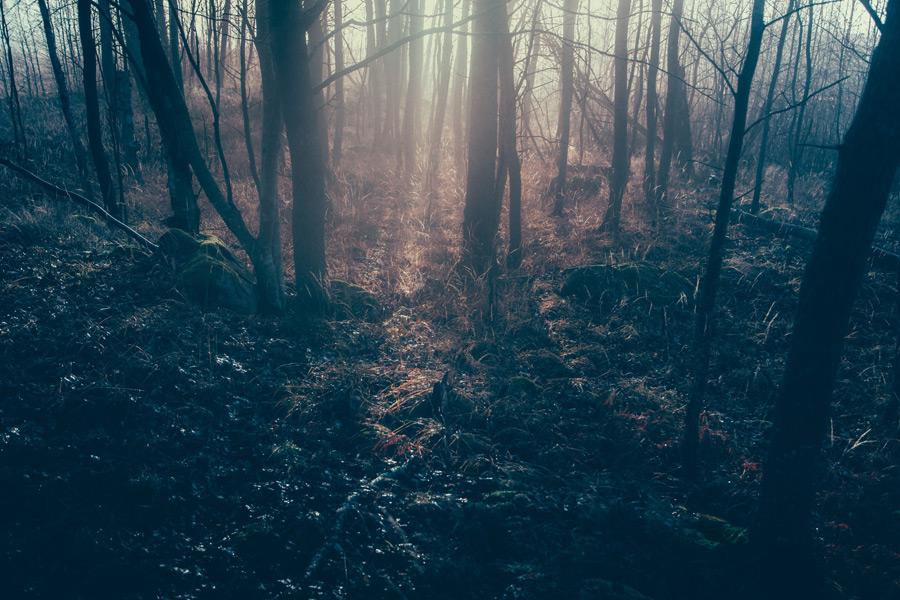 フリー写真 霧のかかる森の風景