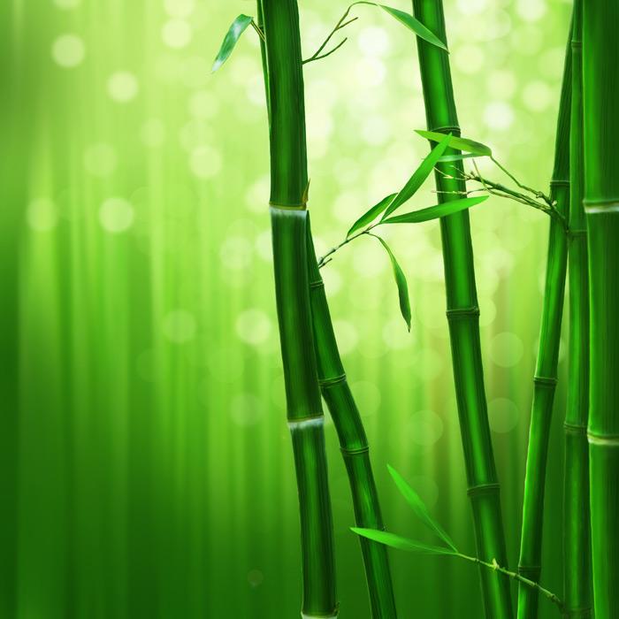 フリーイラスト 光の玉ボケと竹林の背景
