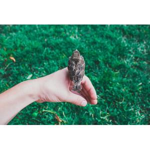 フリー写真, 動物, 鳥類, 鳥(トリ), 人と動物, 人体, 手