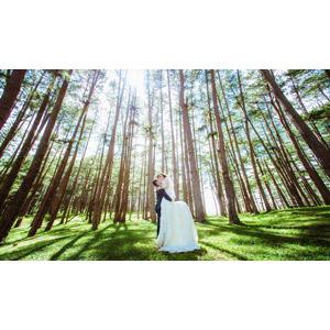 フリー写真, 人物, カップル, 花婿(新郎), 花嫁(新婦), 結婚式(ブライダル), 二人, ウェディングドレス, 抱き上げる, 人と風景, 森林, 樹木