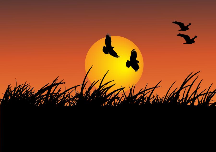 フリーイラスト 夕日と鳥のシルエットの風景