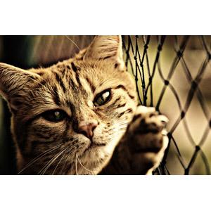 フリー写真, 動物, 哺乳類, 猫(ネコ), 網(ネット)
