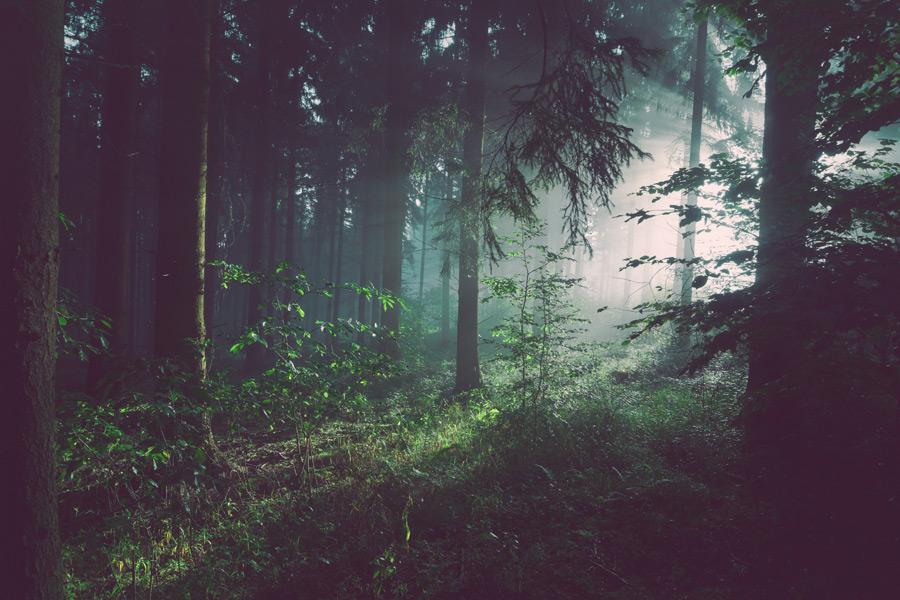 フリー写真 霧のかかる森と太陽の光の風景