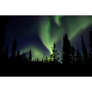 フリー写真, 風景, 自然, 夜, 樹木, 夜空, オーロラ, アメリカの風景, アラスカ州