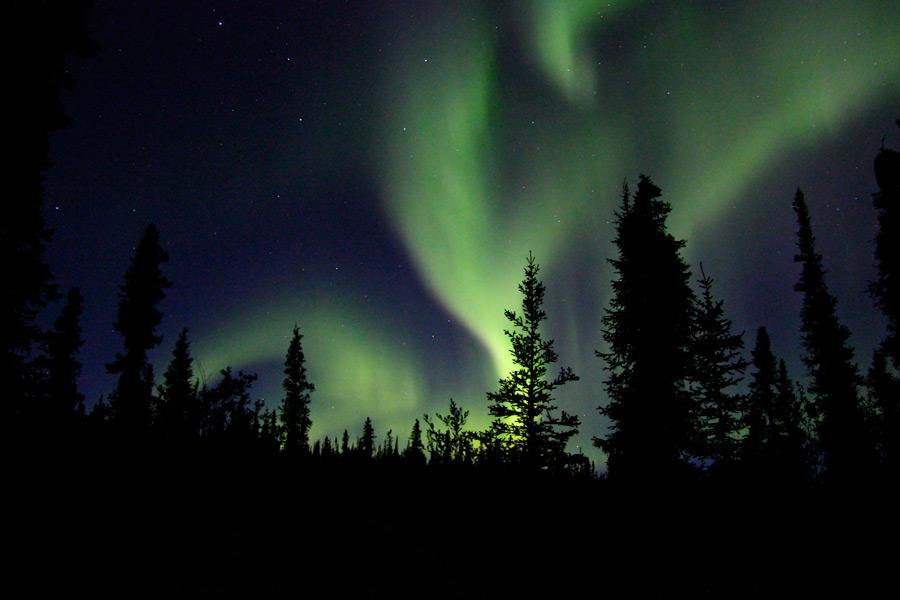 フリー写真 アラスカ州の木々とオーロラの風景