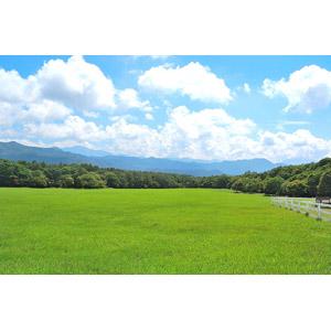 フリー写真, 風景, 草原, 牧場, 日本の風景, 山梨県