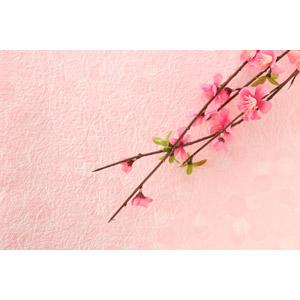 フリー写真, 背景, 植物, 花, 梅(ウメ), 正月, 春, 1月, 元旦(元日), ピンク色, 和紙