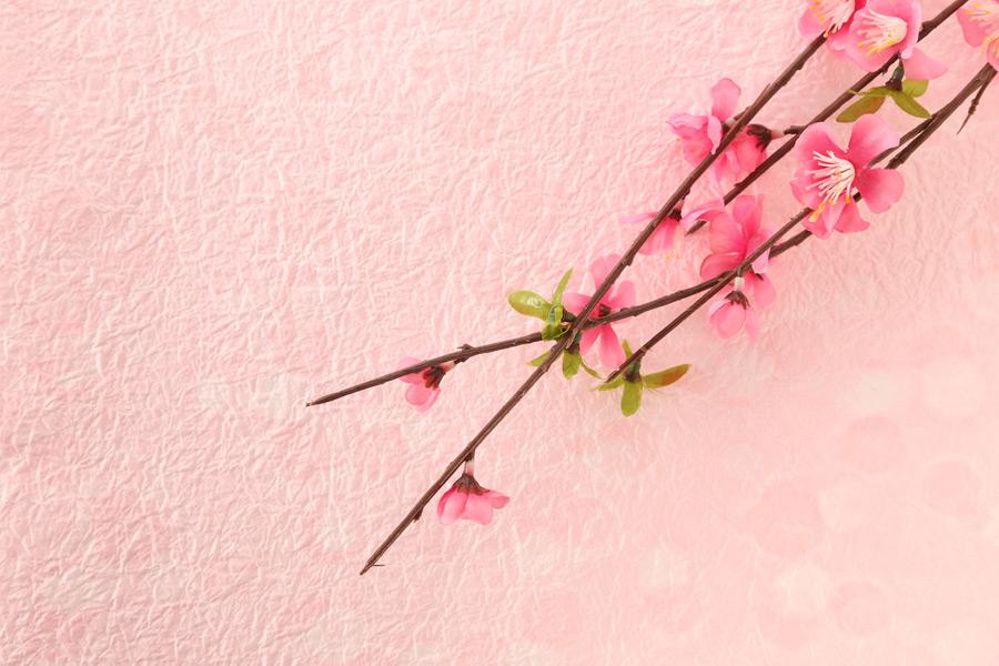 フリー写真 梅の花の背景