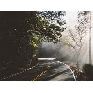 フリー写真, 風景, 道路, 森林, 太陽光(日光), 木漏れ日, アメリカの風景