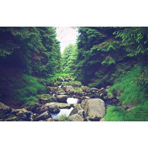 フリー写真, 風景, 自然, 森林, 河川, 岩