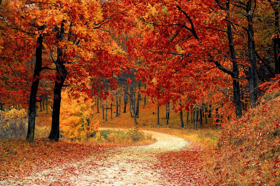 フリー写真 紅葉した森の木々と小道の風景