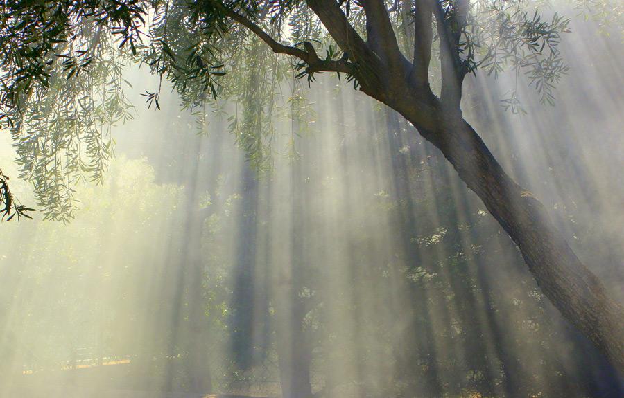 フリー写真 薄明光線と木の風景