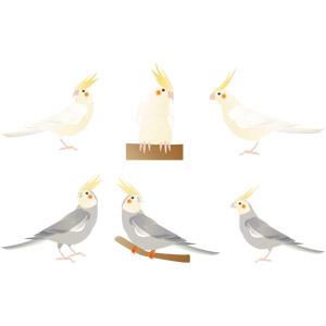 フリーイラスト, ベクター画像, AI, 動物, 鳥類, 鳥(トリ), インコ, オカメインコ
