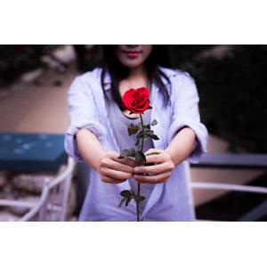 フリー写真, 人物, 女性, アジア人女性, ベトナム人, 女性(00006), 差し出す, 人と花, 植物, 花, 薔薇(バラ), 赤色の花