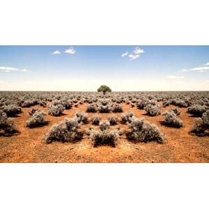 フリー写真, 風景, 自然, 砂漠, 雑草, 樹木, オーストラリアの風景