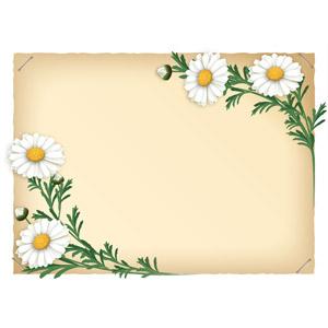 フリーイラスト, ベクター画像, AI, 背景, フレーム, 対角フレーム, 植物, 花, マーガレット, 白色の花