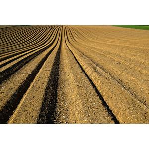 フリー写真, 風景, 畑, 田舎