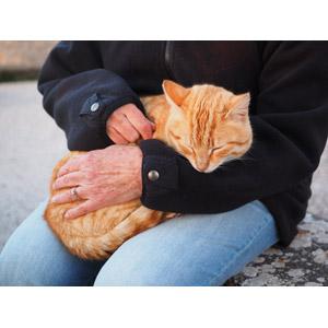 フリー写真, 動物, 哺乳類, 猫(ネコ), 茶トラ猫, 人と動物, 寝る(動物)