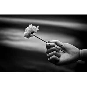 フリー写真, 人形, 手, 植物, 花, 差し出す, モノクロ
