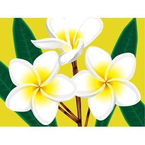 フリーイラスト, ベクター画像, AI, 植物, 花, プルメリア, 白色の花