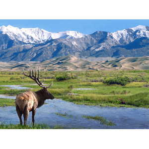 フリー写真, 風景, 自然, 河川, 砂丘, 山, 動物, 哺乳類, 鹿(シカ), アメリカアカシカ(エルク), グレートサンドデューンズ国立公園, コロラド州, アメリカの風景